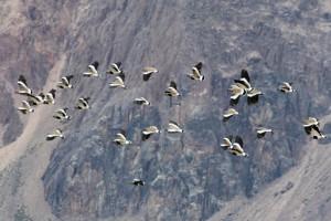 Vogelschwarm im Nationalpark Perito Moreno