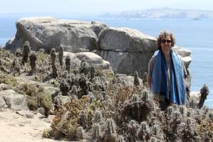 Isla Damas im Naturschutzgebiet Pingüino de Humboldt, Chile