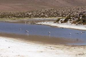 Flamingos, Vado Rio Putana, Atacamawüste, Chile