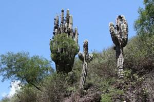 Nationalpark Los Cardones, Provinz Salta, Argentinien
