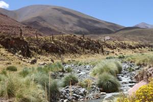RN 40, Provinz Salta, Argentinien