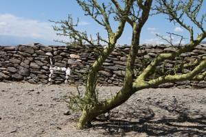 Ruinen von Quilmes, Amaicha, Provinz Tucumán, RN 40, Argentinien