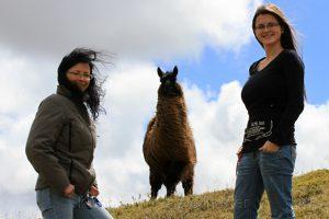 Die ersten Lamas die uns in Südamerika begegnet sind. Birgit Knoblauch und Ria-Helen Zühlke