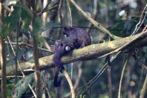 Erdölförderung im Regenwald von Ecuador, hoffentlich bleibt die Ruhe für die Beiden