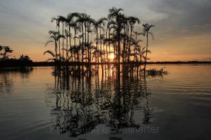 Lago Grande, Cuyabeno, Amazonas, Ecuador
