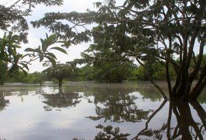 Naturreservat Cuyabeno, Amazonas, Ecuador