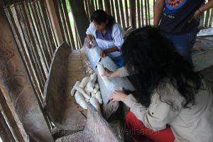 Zubereitung von Juca-Fladen, Cuyabeno, Amazonas, Ecuador, Birgit Knoblauch