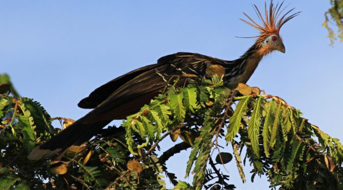 Erdölförderung im Regenwald Ecuadors